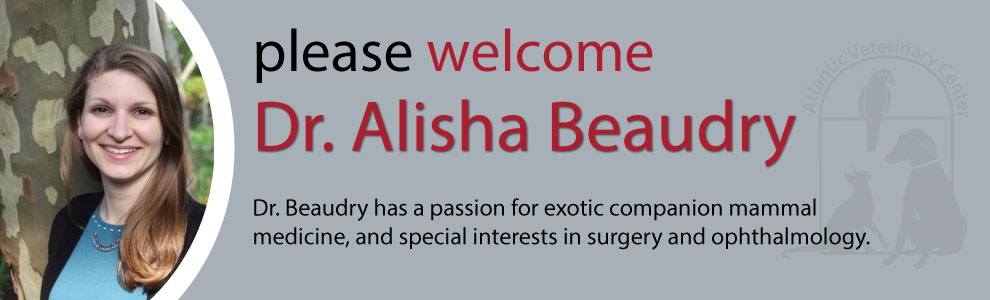 Welcome Dr Alisha Beaudry